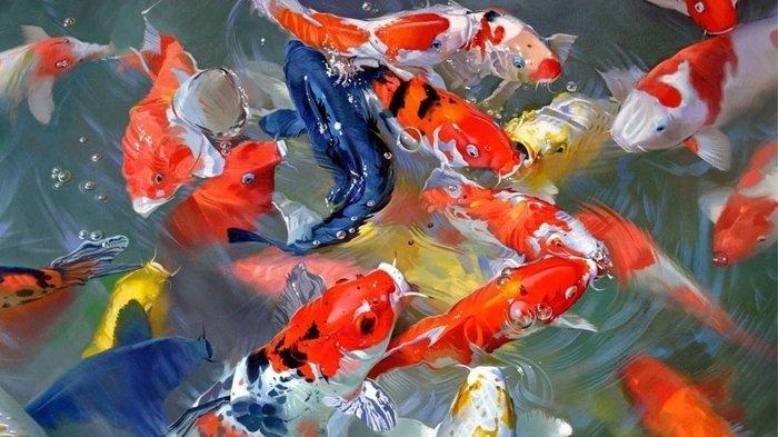 Grosir Indukan Dan Bibit Ikan Koi Murah